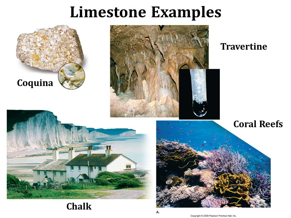 Limestone Examples Travertine Coquina Coral Reefs Chalk
