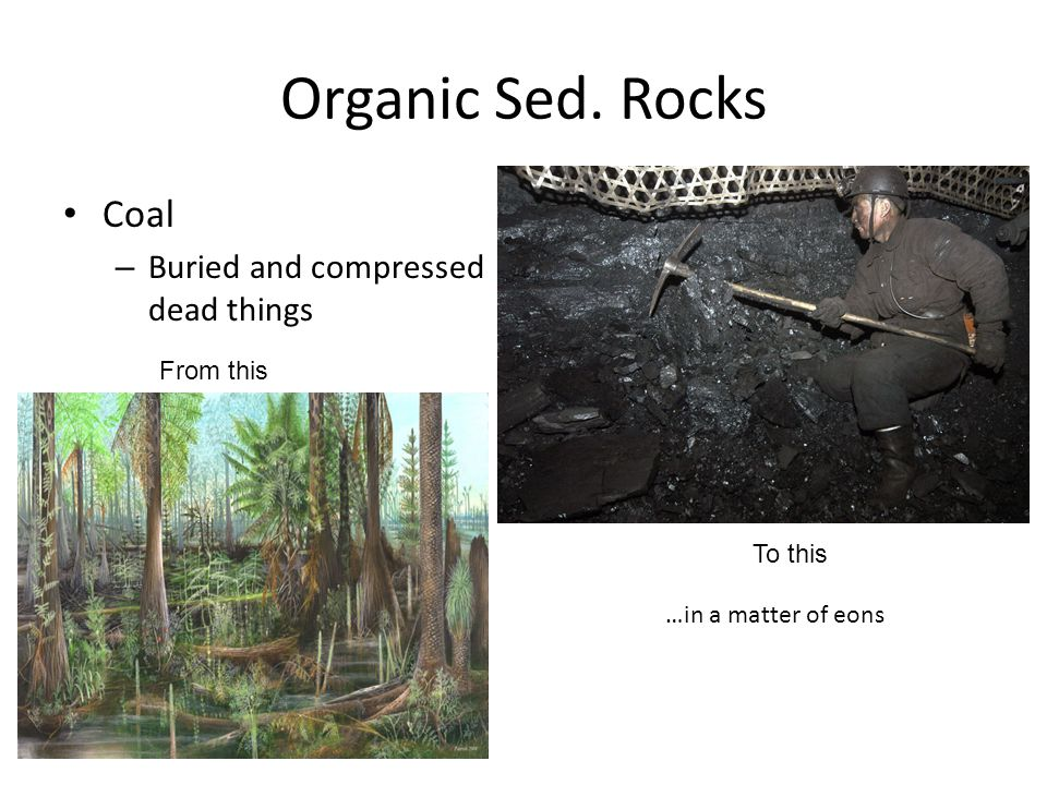 Organic Sed. Rocks Coal Buried and compressed dead things From this