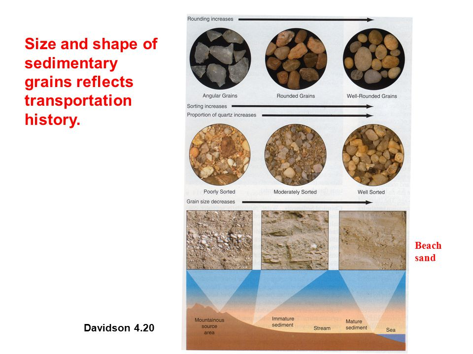 Size and shape of sedimentary grains reflects transportation history.
