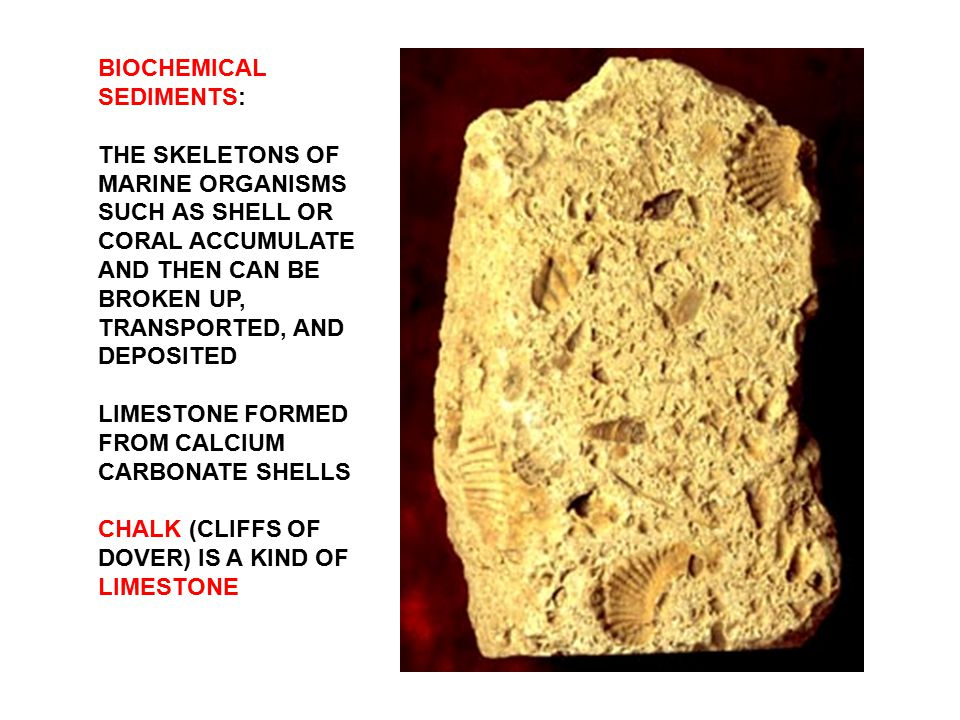 BIOCHEMICAL SEDIMENTS: