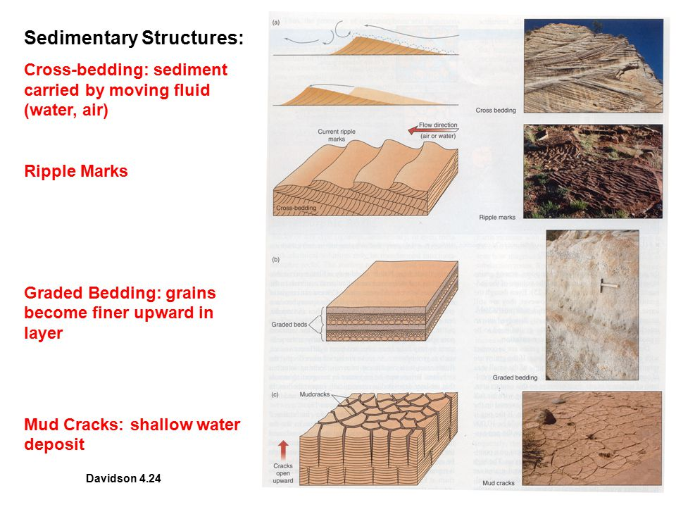 Sedimentary Structures: