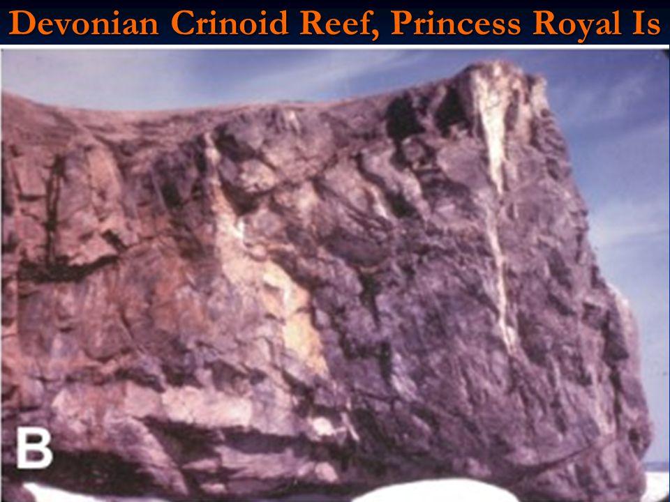 Devonian Crinoid Reef, Princess Royal Is