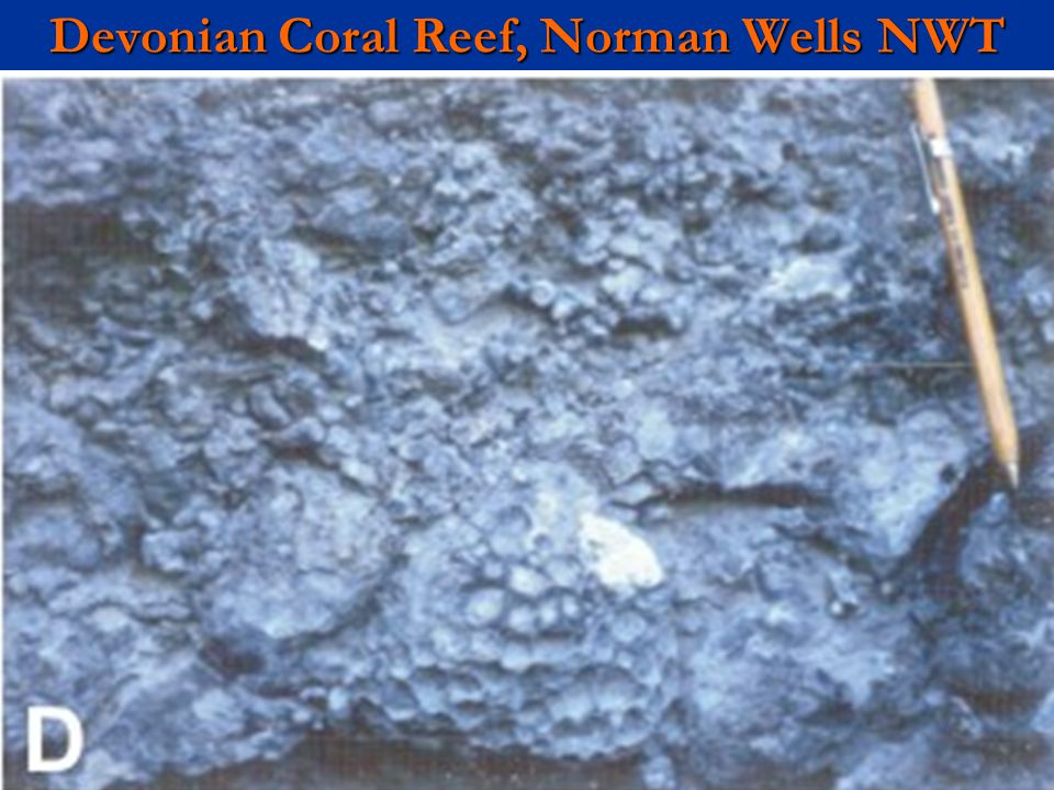 Devonian Coral Reef, Norman Wells NWT