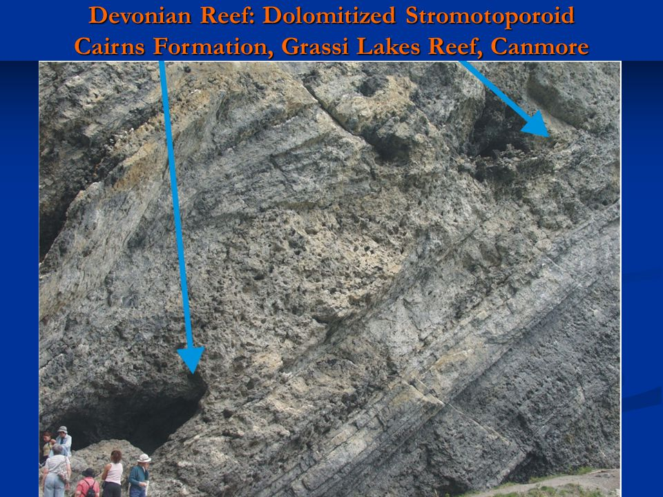 Devonian Reef: Dolomitized Stromotoporoid Cairns Formation, Grassi Lakes Reef, Canmore