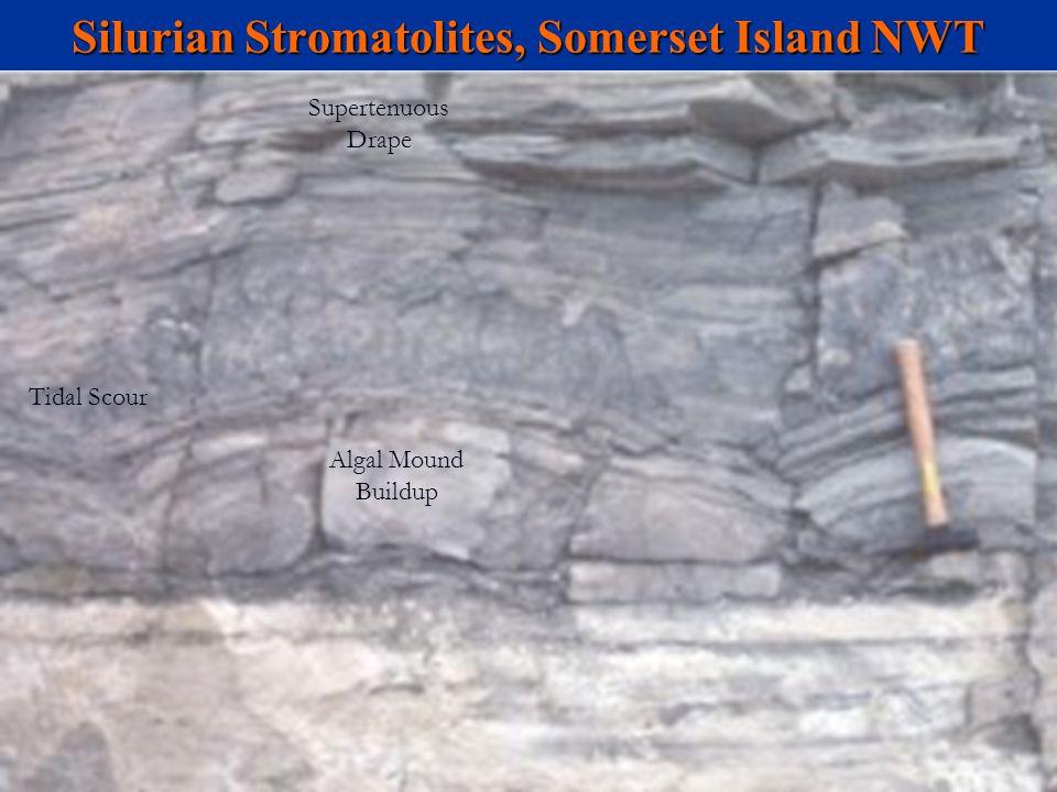 Silurian Stromatolites, Somerset Island NWT