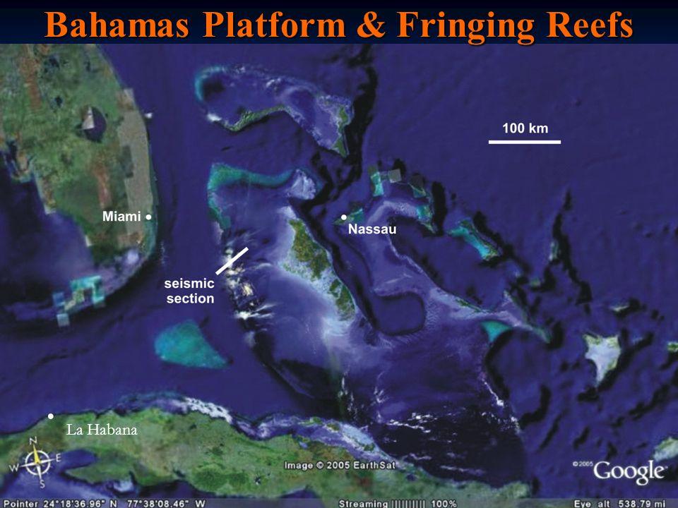 Bahamas Platform & Fringing Reefs