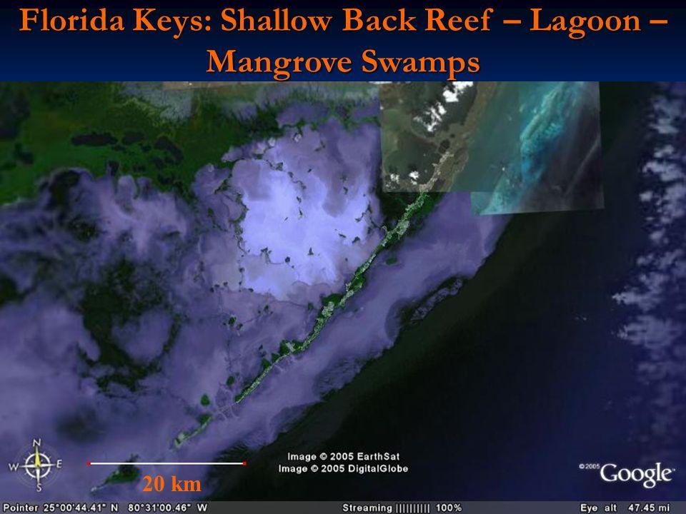 Florida Keys: Shallow Back Reef – Lagoon – Mangrove Swamps