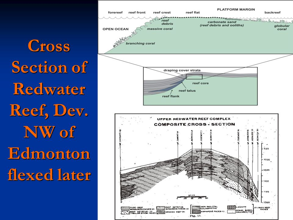 Cross Section of Redwater Reef, Dev. NW of Edmonton flexed later