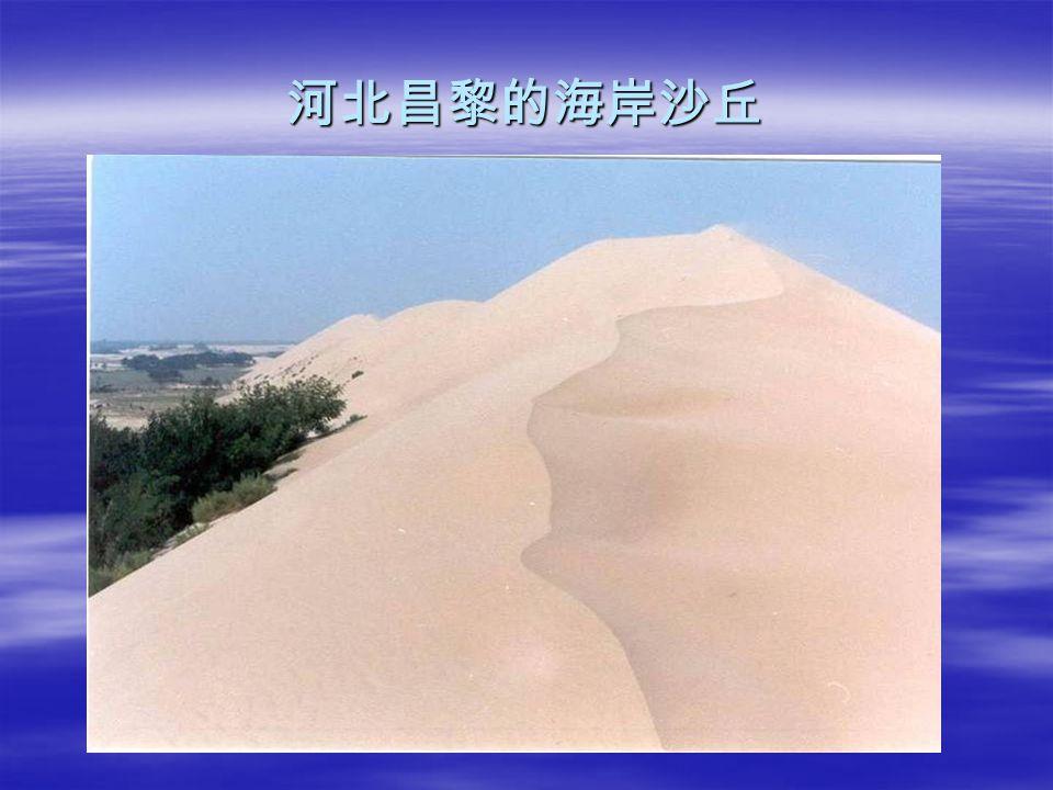 河北昌黎的海岸沙丘