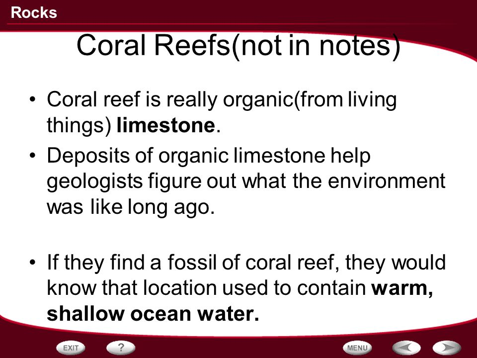 Coral Reefs(not in notes)