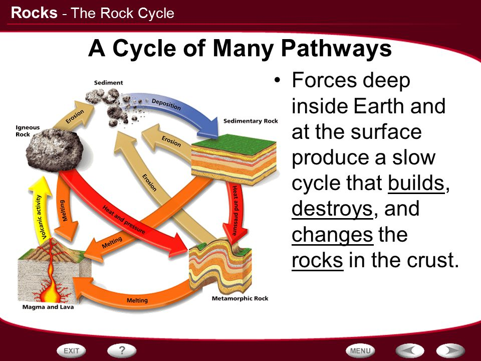 A Cycle of Many Pathways