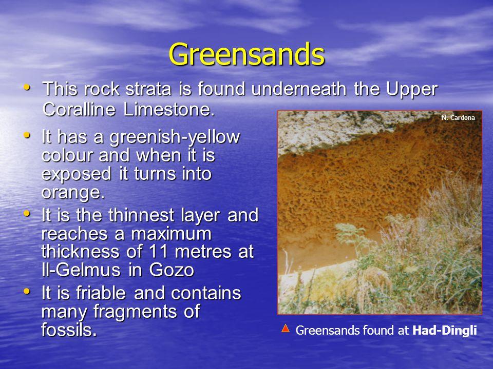 Greensands This rock strata is found underneath the Upper Coralline Limestone. N. Cardona.