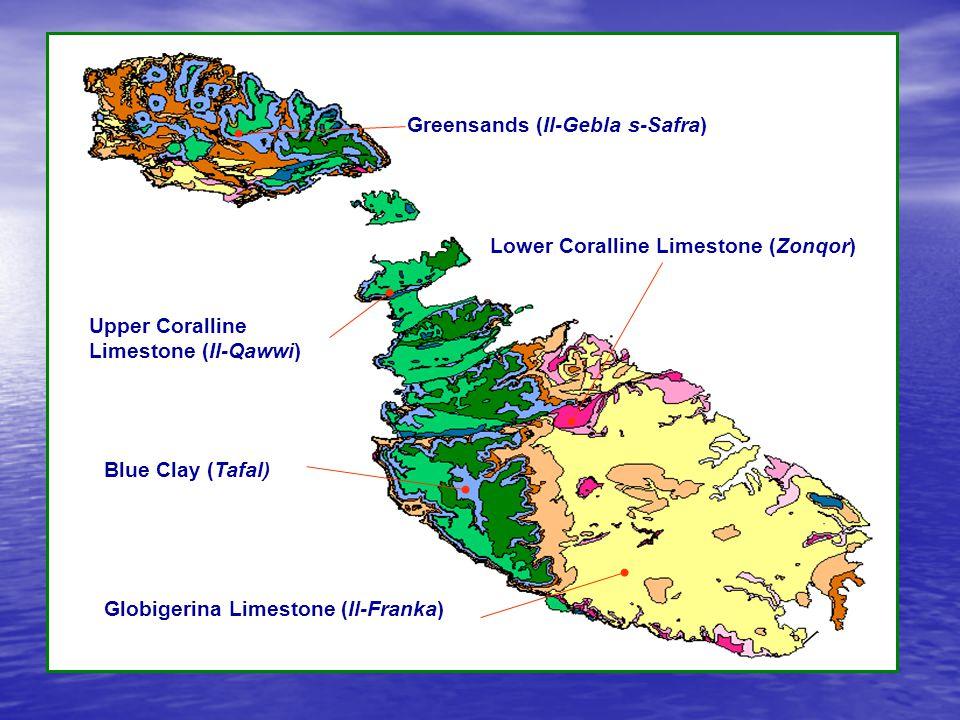 Upper Coralline Limestone (Il-Qawwi)