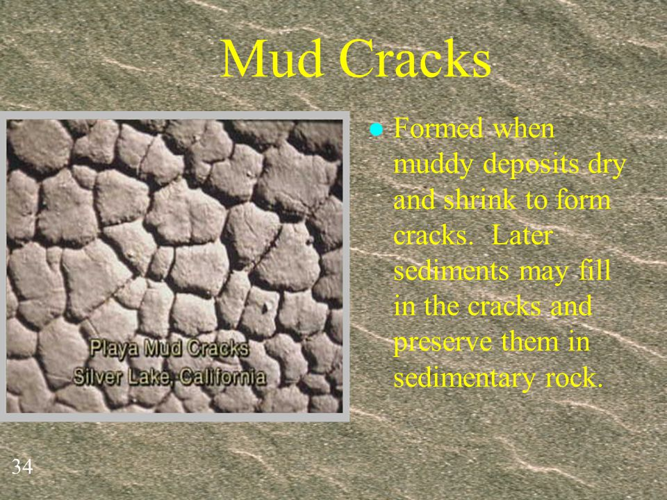 Mud Cracks Formed when muddy deposits dry and shrink to form cracks.