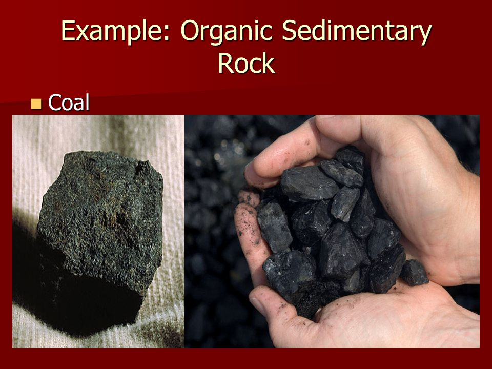 Example: Organic Sedimentary Rock