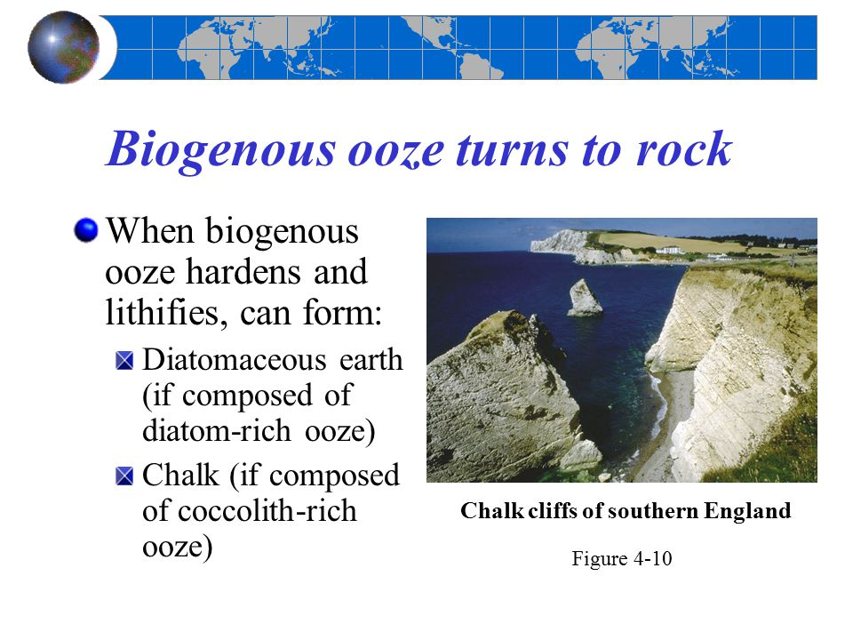 Biogenous ooze turns to rock