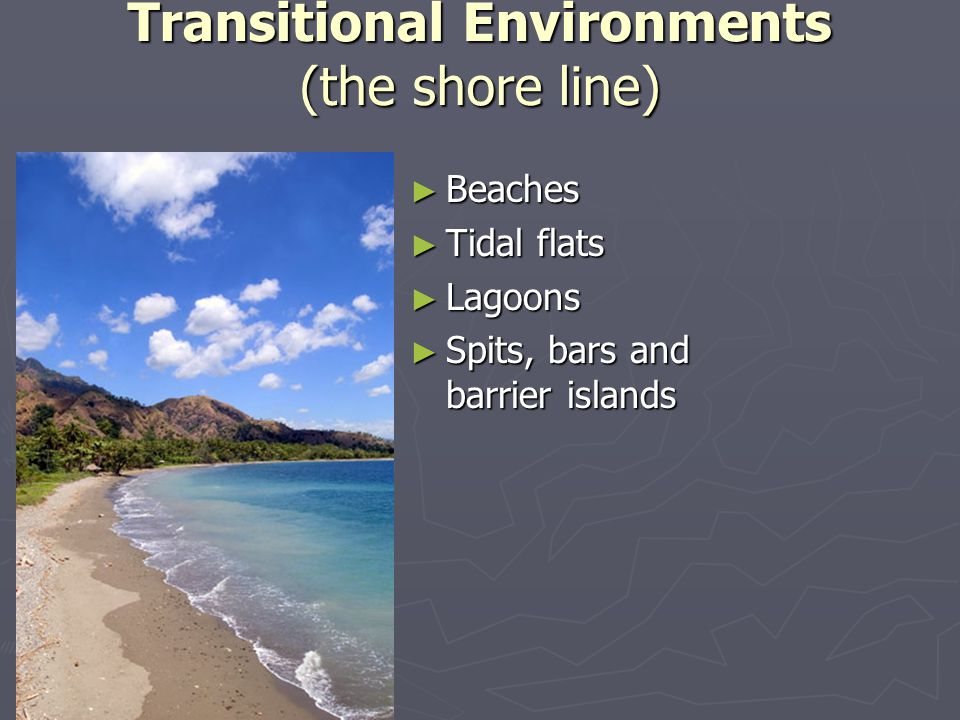 Transitional Environments (the shore line)