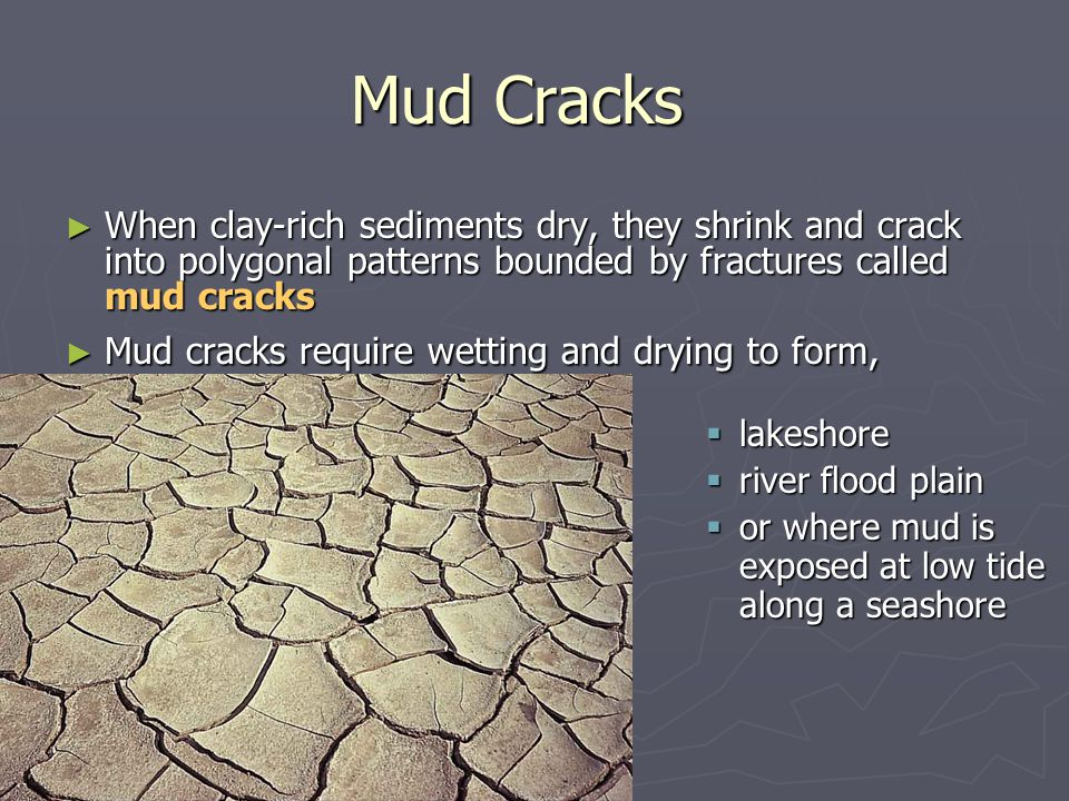 Mud Cracks When clay-rich sediments dry, they shrink and crack into polygonal patterns bounded by fractures called mud cracks.