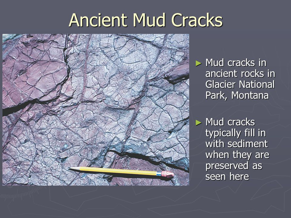 Ancient Mud Cracks Mud cracks in ancient rocks in Glacier National Park, Montana.
