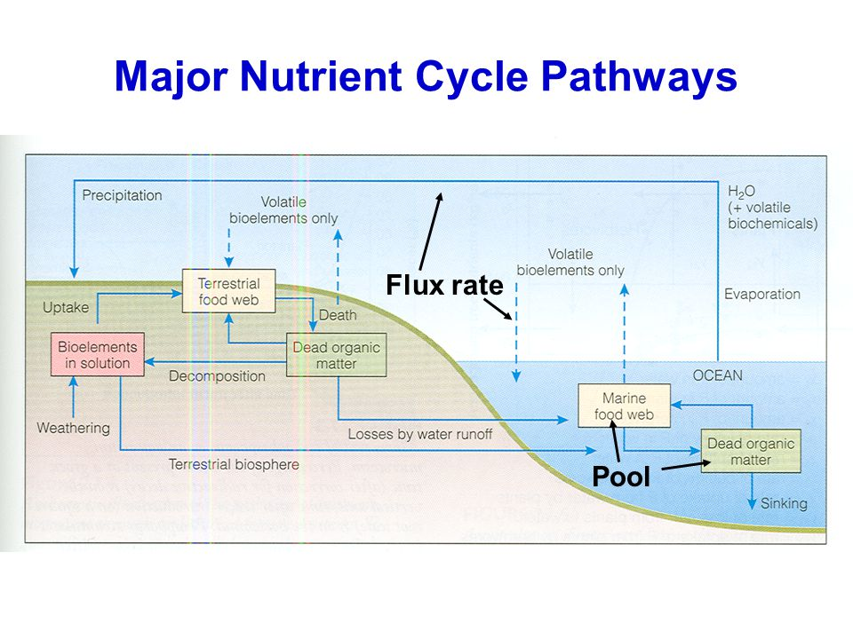 Major Nutrient Cycle Pathways
