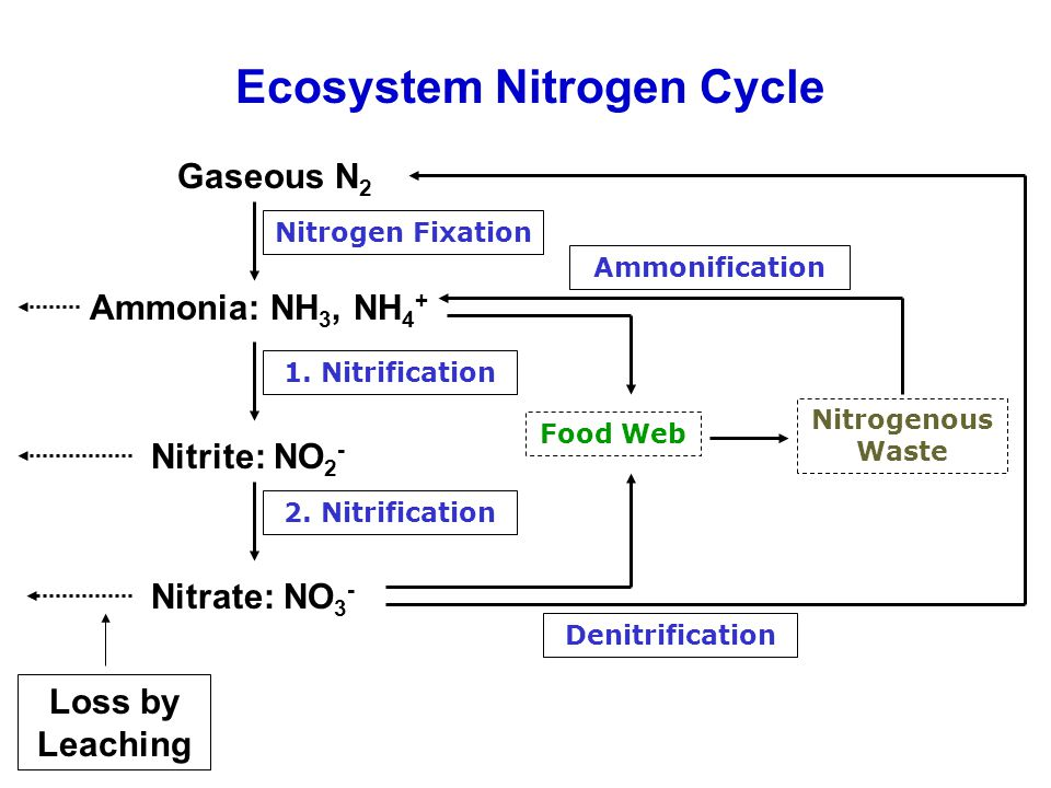 Ecosystem Nitrogen Cycle