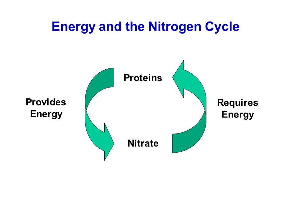 Energy and the Nitrogen Cycle