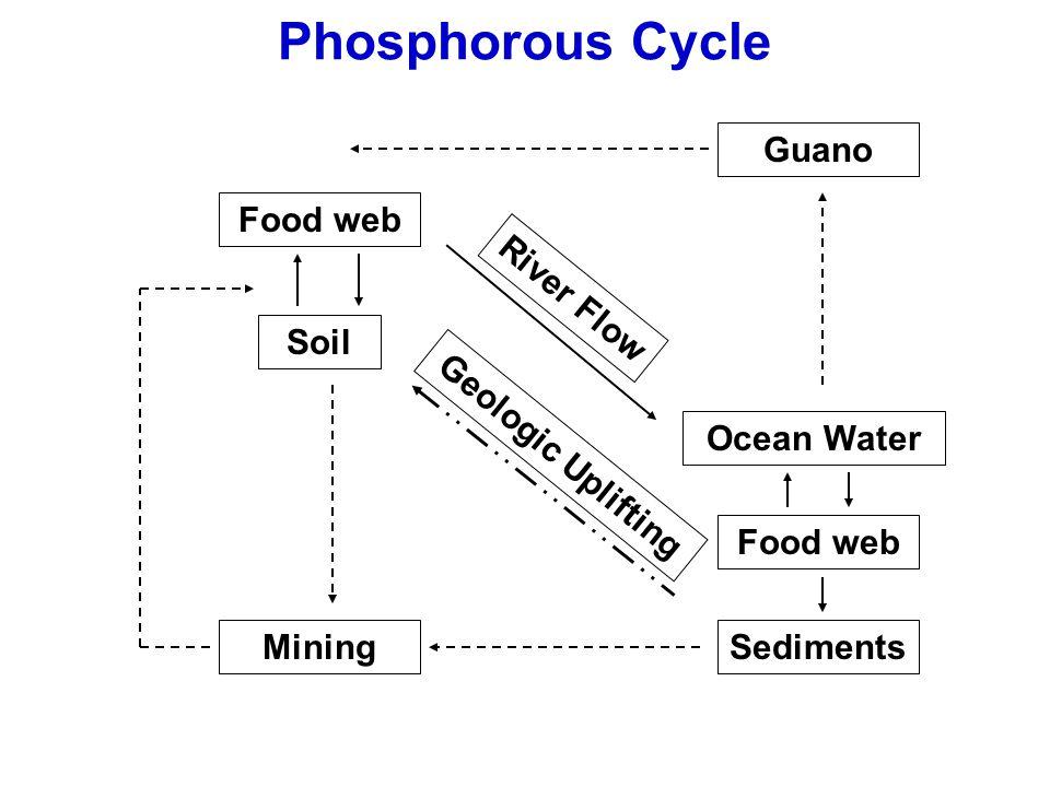 Phosphorous Cycle Guano Food web River Flow Soil Ocean Water