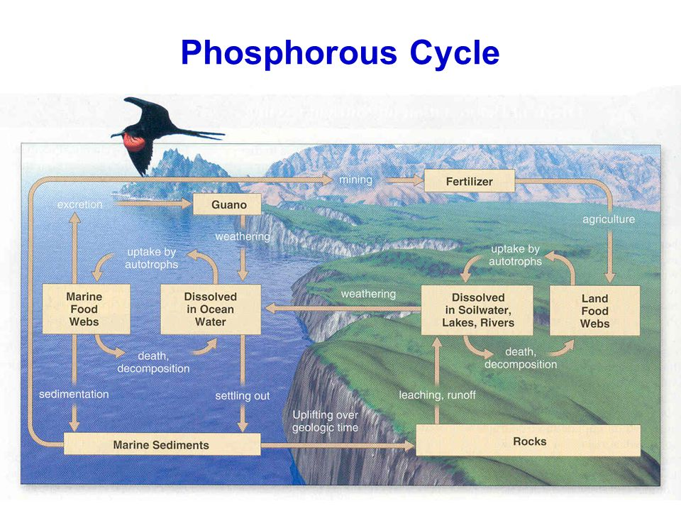 Phosphorous For Soil Natural Ways