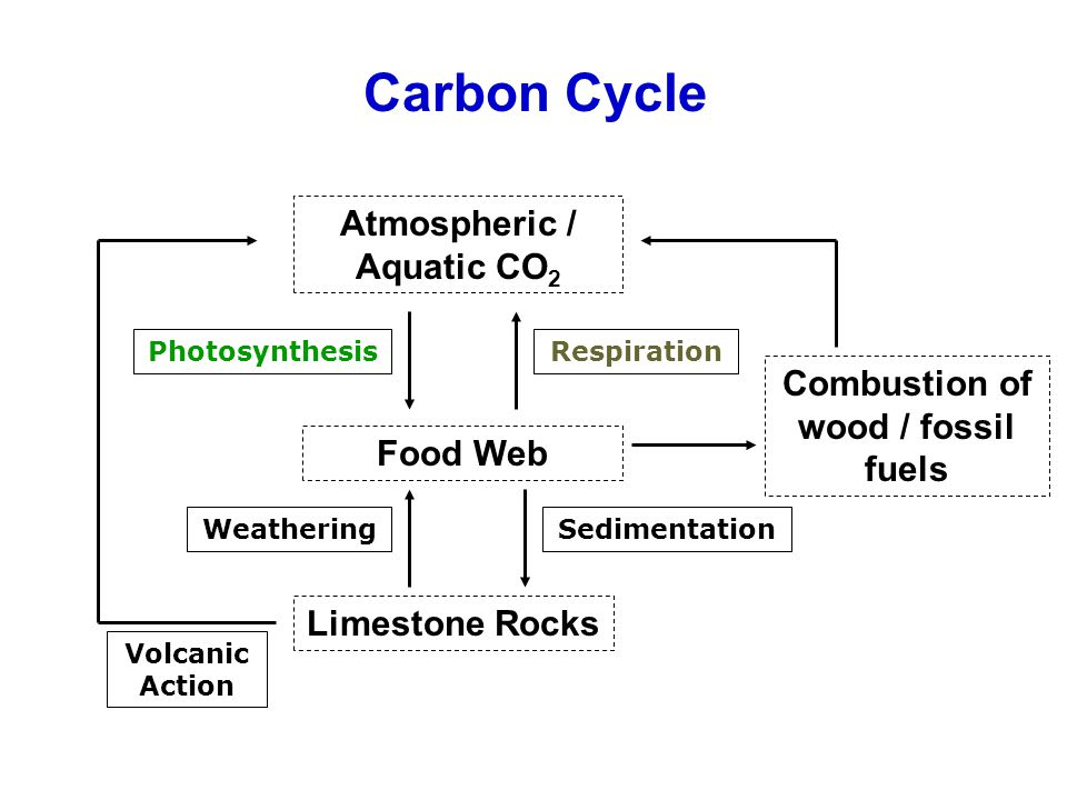 Atmospheric / Aquatic CO2 Combustion of wood / fossil fuels