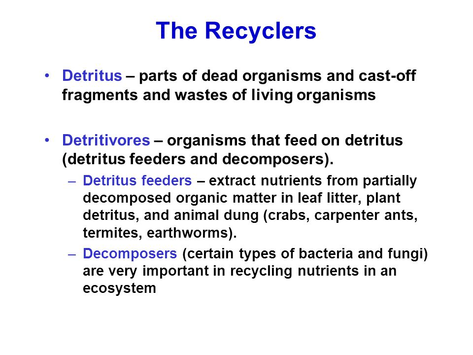 The Recyclers Detritus – parts of dead organisms and cast-off fragments and wastes of living organisms.