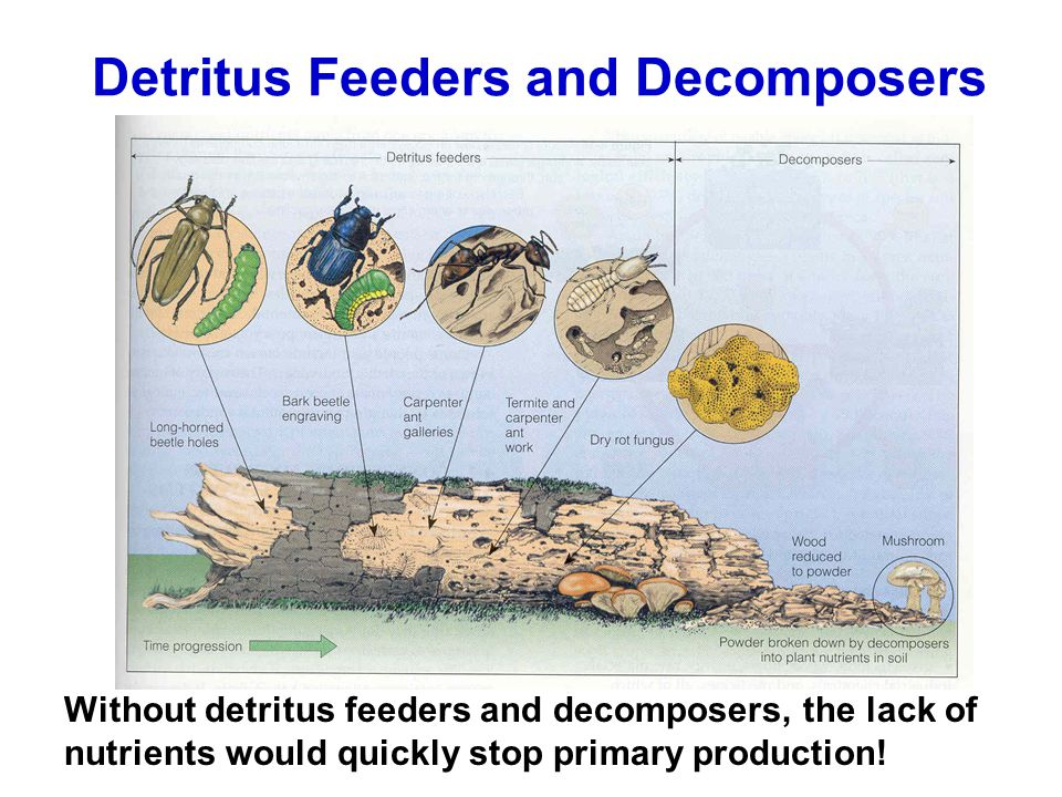 Detritus Feeders and Decomposers
