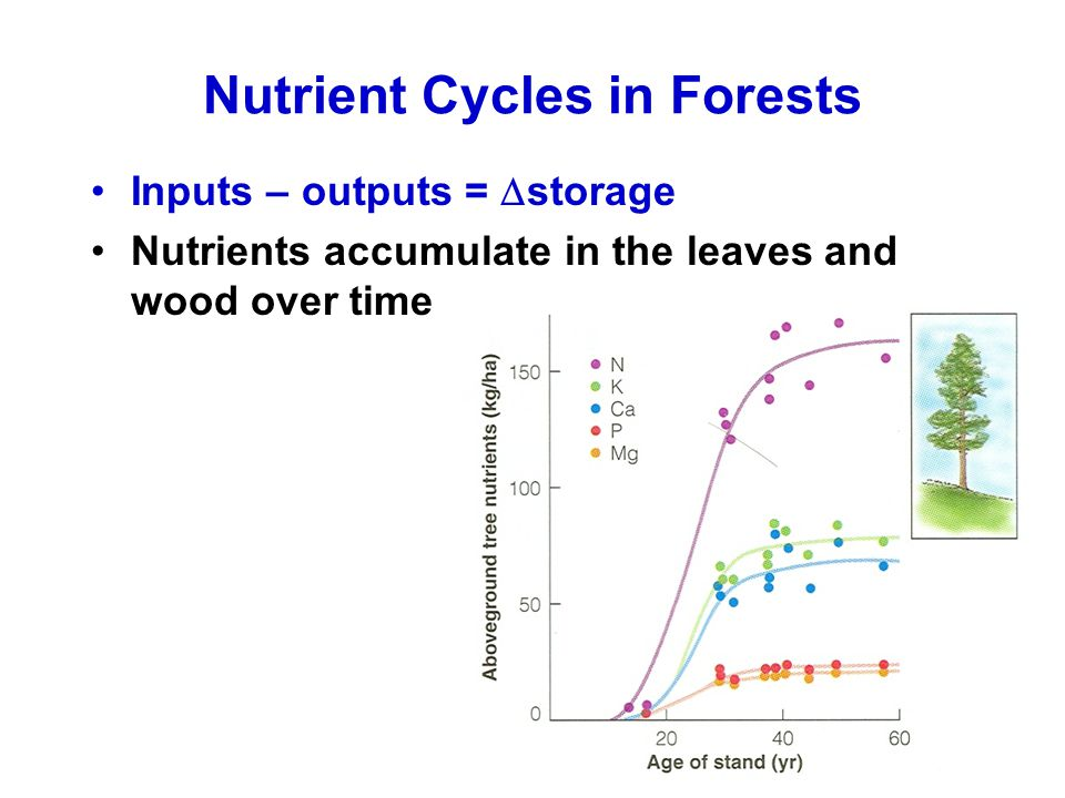 Nutrient Cycles in Forests