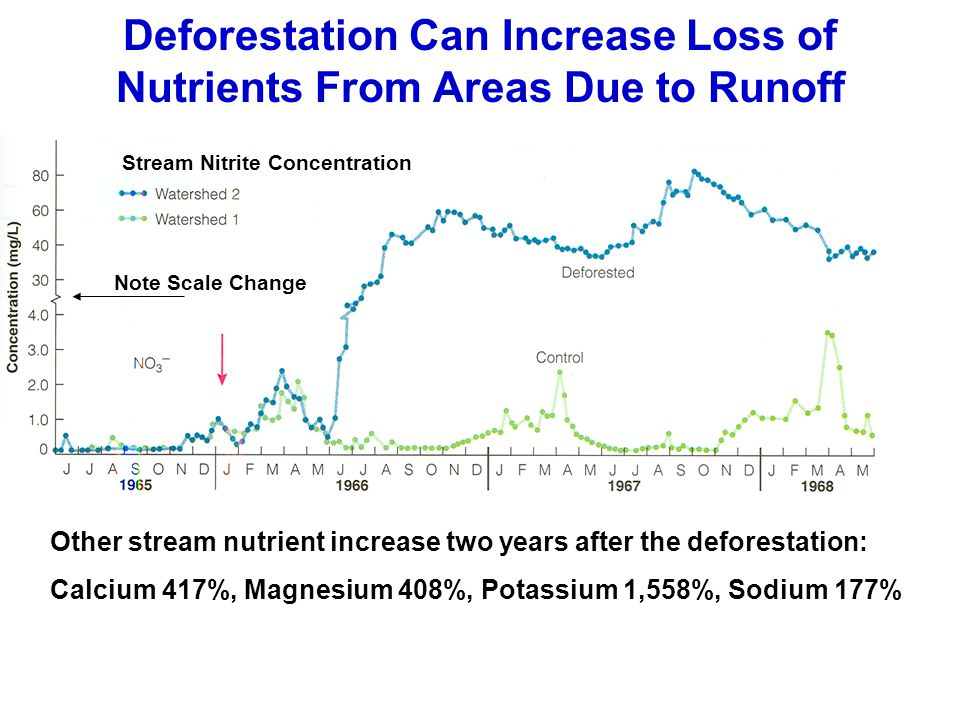 Deforestation Can Increase Loss of Nutrients From Areas Due to Runoff