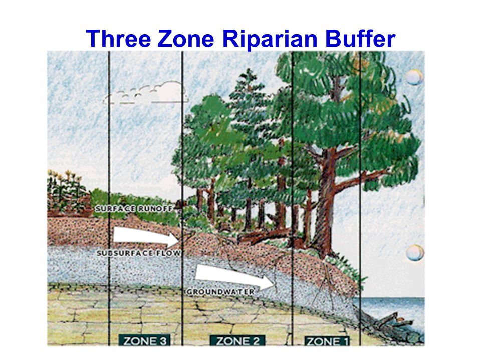 Three Zone Riparian Buffer