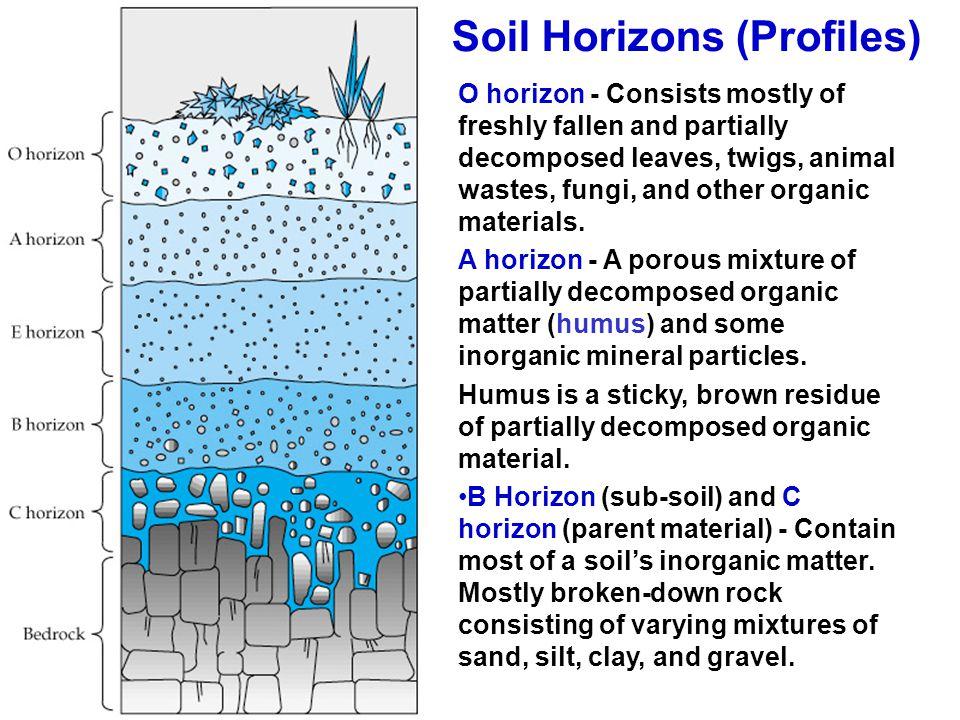 Soil Horizons (Profiles)