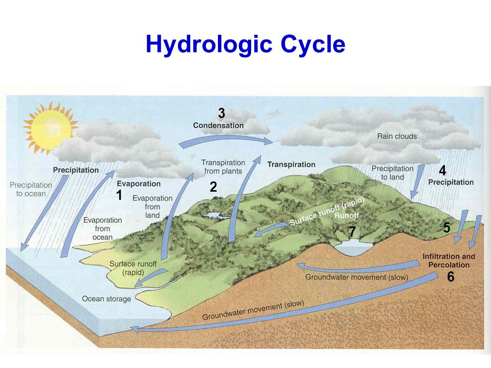 Hydrologic Cycle 1 2 4 3 5 6 7
