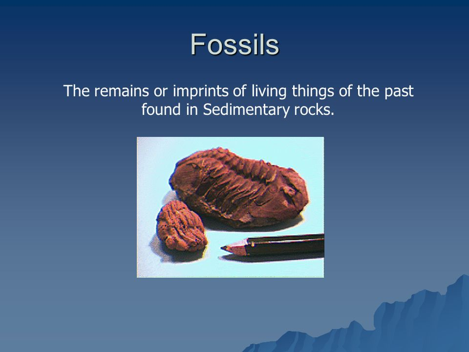 Fossils The remains or imprints of living things of the past found in Sedimentary rocks.