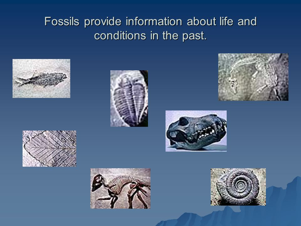 Fossils provide information about life and conditions in the past.