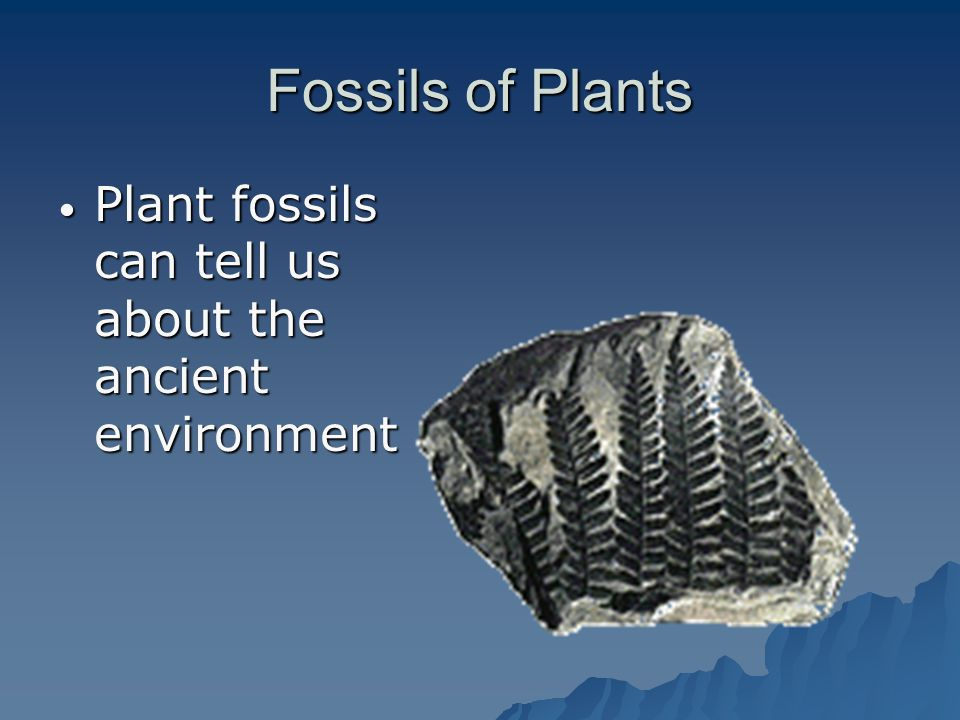 Fossils of Plants Plant fossils can tell us about the ancient environment