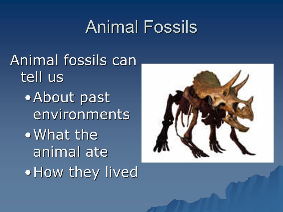 Animal Fossils Animal fossils can tell us About past environments