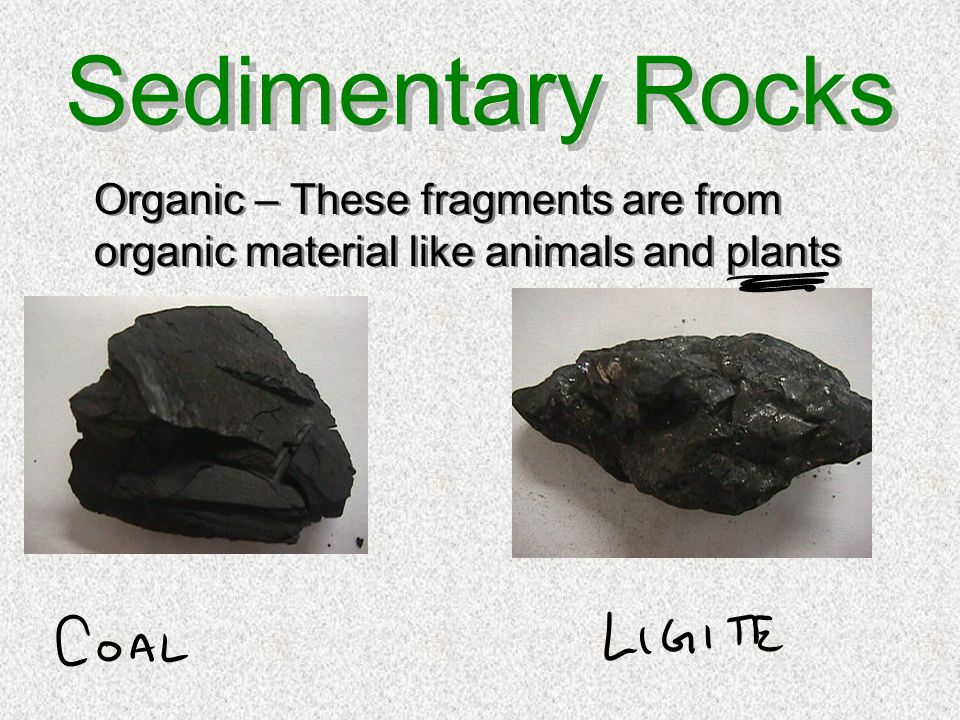 Sedimentary Rocks Organic – These fragments are from organic material like animals and plants