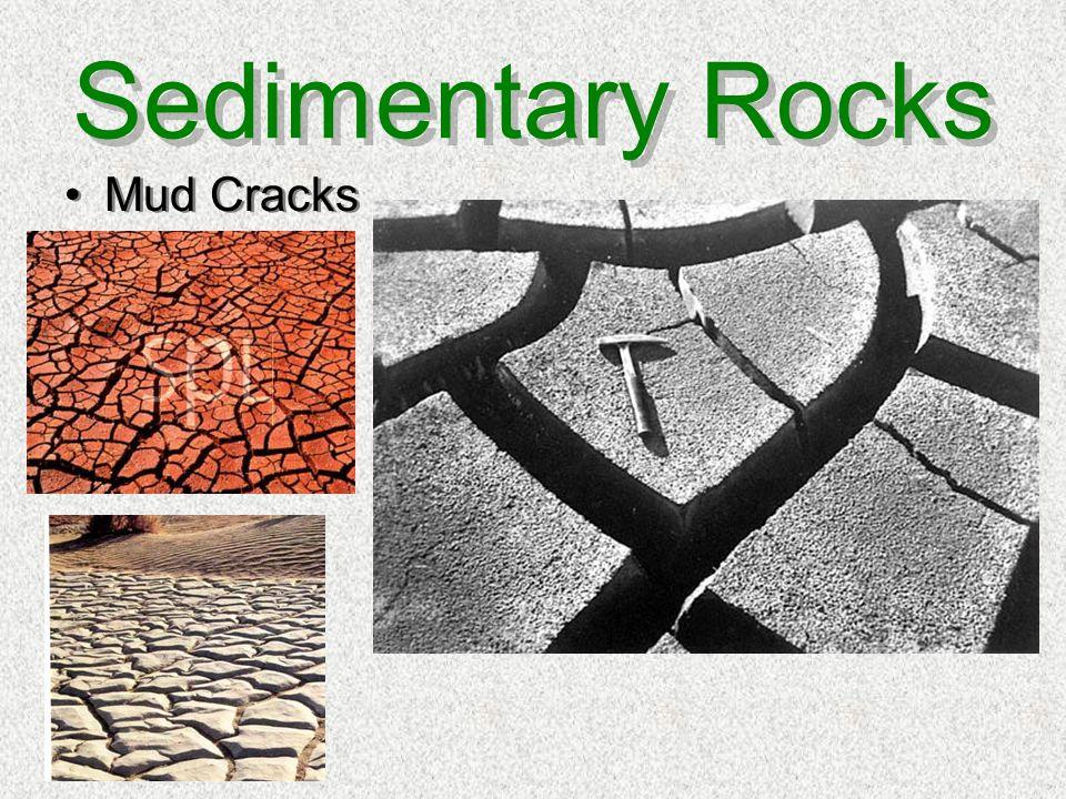 Sedimentary Rocks Mud Cracks