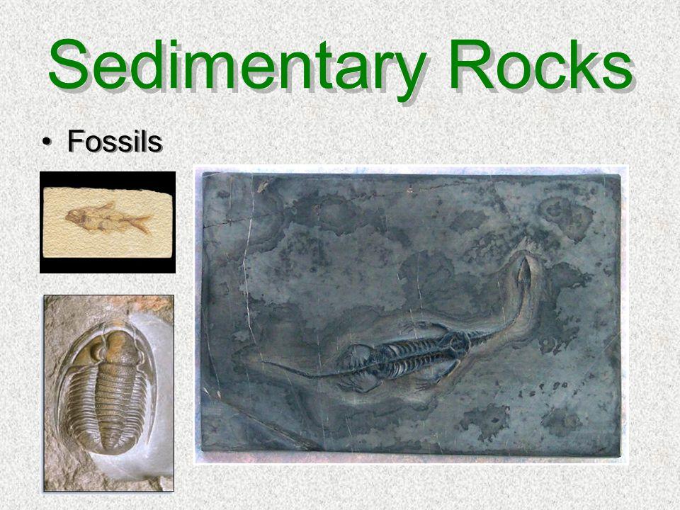 Sedimentary Rocks Fossils
