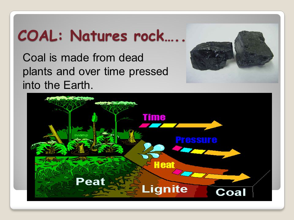 COAL: Natures rock….. Coal is made from dead plants and over time pressed into the Earth.