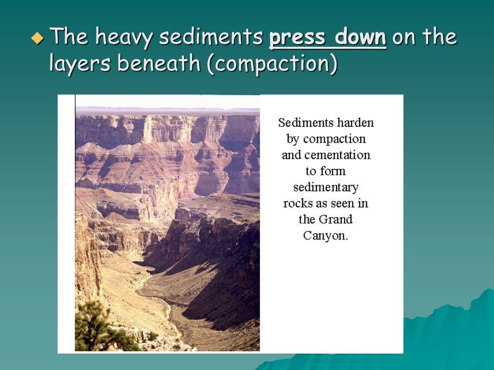 The heavy sediments press down on the layers beneath (compaction)