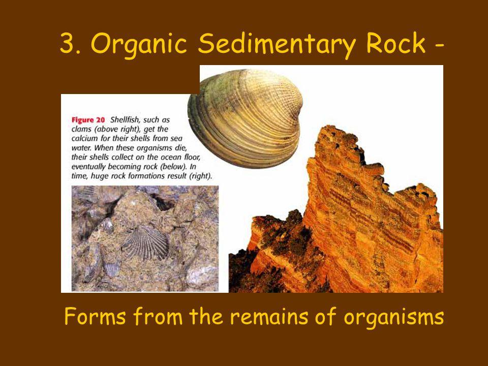 3. Organic Sedimentary Rock -