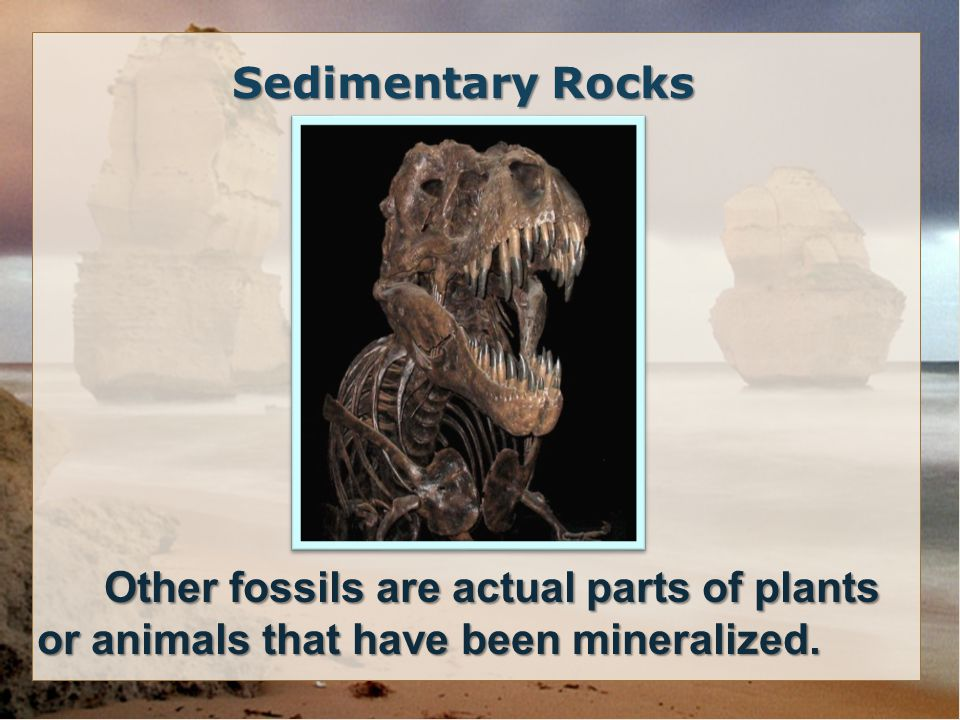 Other fossils are actual parts of plants or animals that have been mineralized.