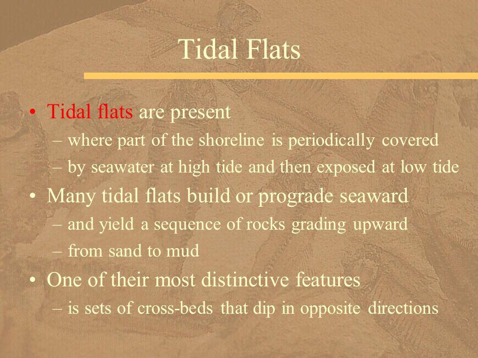 Tidal Flats Tidal flats are present