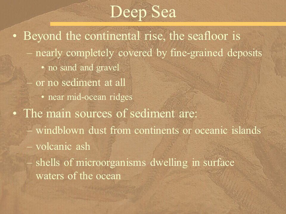 Deep Sea Beyond the continental rise, the seafloor is