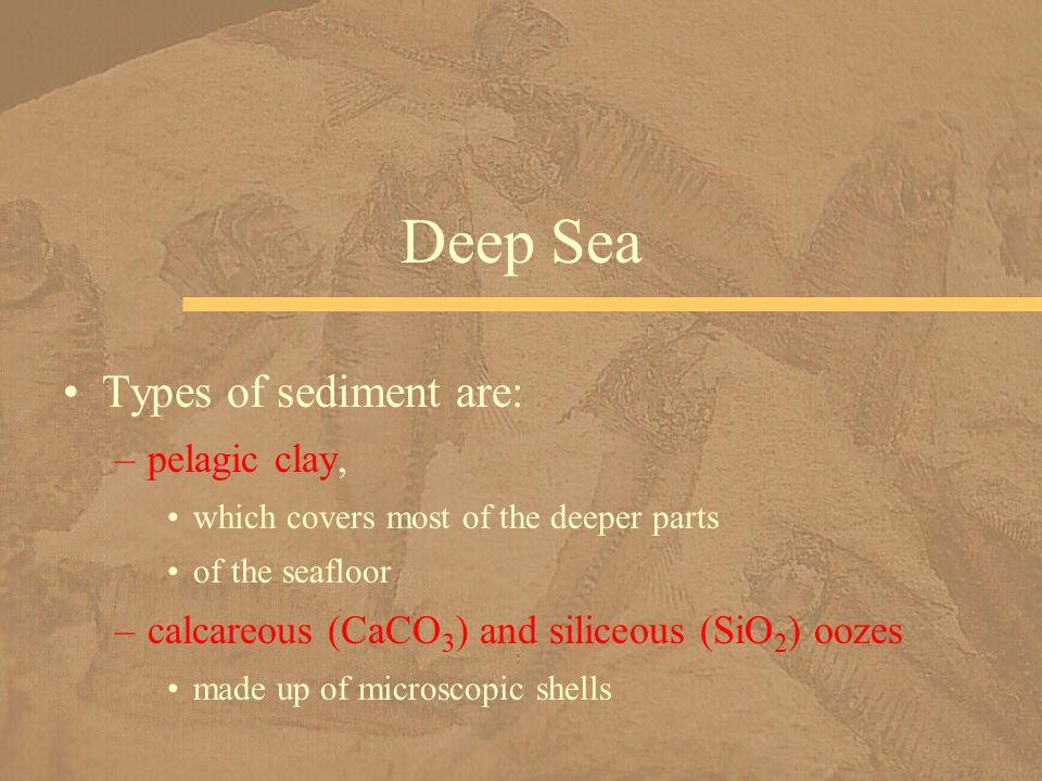 Deep Sea Types of sediment are: pelagic clay,